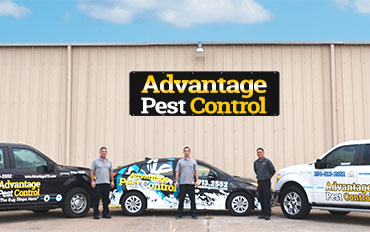 Pest Control Temple TX