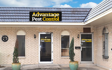 Pest Control Killeen Tx Advantage Pest Control